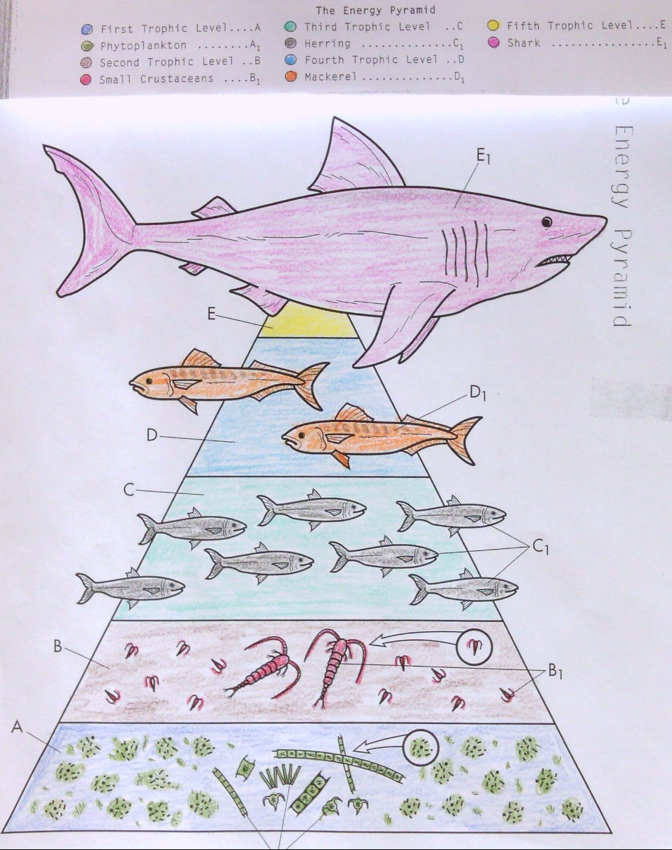 e nergy pyramid coloring page coloring page